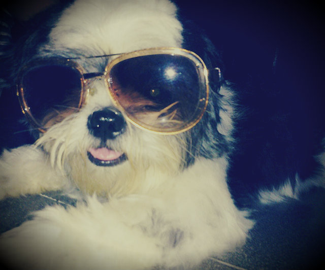 Photo Blog: Ain't No Dog Cooler Than Kiko